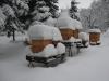winter-am-stand